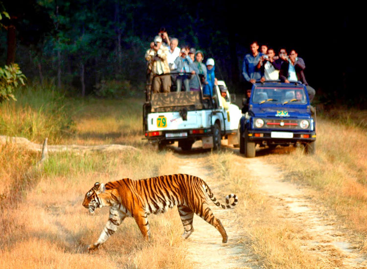 Ranthambore National Park,