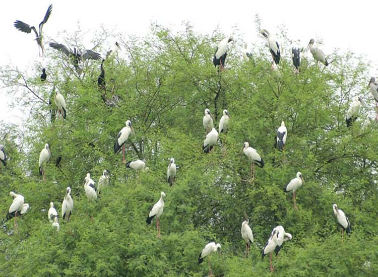 Bharatpur Bird Sanctuary Bharatpur Rajasthan