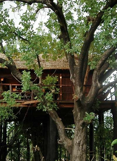 10 Best Tree House Resorts in India the lap of nature