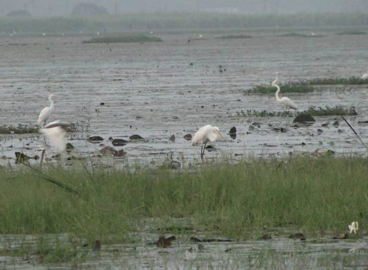 Kondakarla Bird Sanctuary