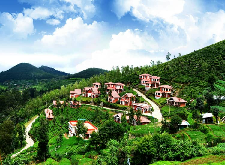 Ooty to celebrate New Year